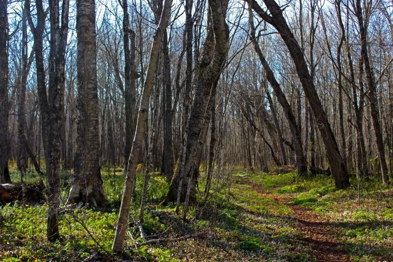 trail pic 2.jpg